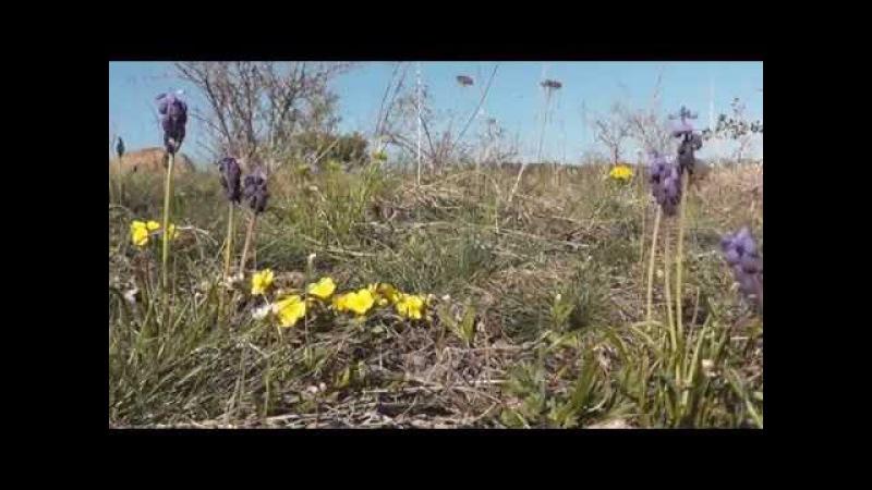 Erdők-mezők tavaszi virágai (Forests, fields of Spring flowers)