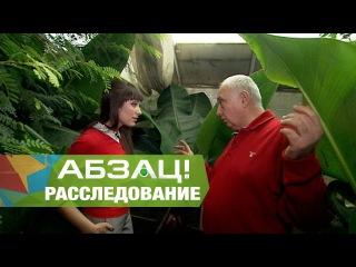 Абзац! тестирует магазинные бананы на обезьяне - 15.12.2016