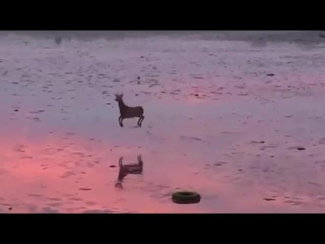 Deer march · coub, коуб