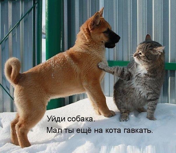 Фото №456239531 со страницы Yuri Dolotov