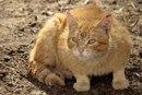 Искушение бездомного кота