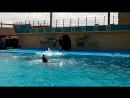 Дельфинарий. Архипо-Осиповка. 2016