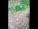 жуткий ДНРовский вейпер в дикой природе.