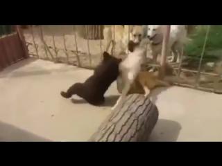 Dog Vs John Cena