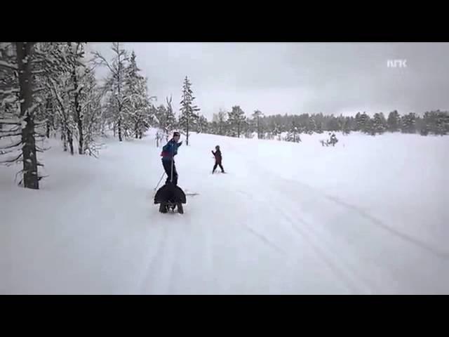 Нападение глухаря на лыжников...
