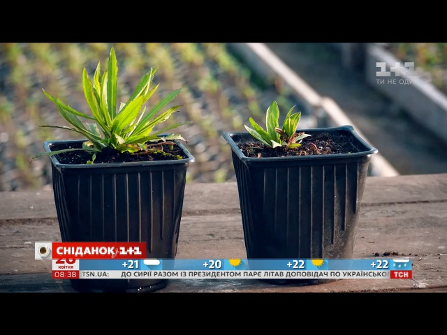 Смотреть Наталья Подлесная рассказала, как выбрать многолетние цветы на ovva.tv