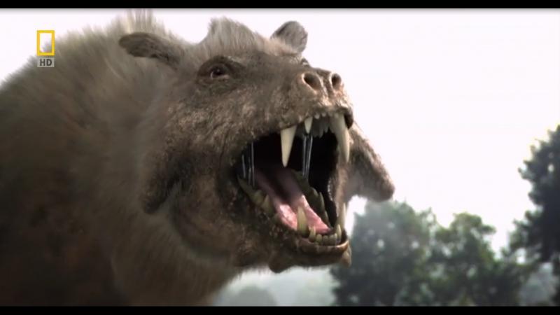 Доисторические хищники/Prehistoric Predators. Адский кабан/Killer Pig