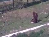 Как правильно снимать медвежонка с дерева