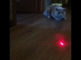 Филя играет с лазером