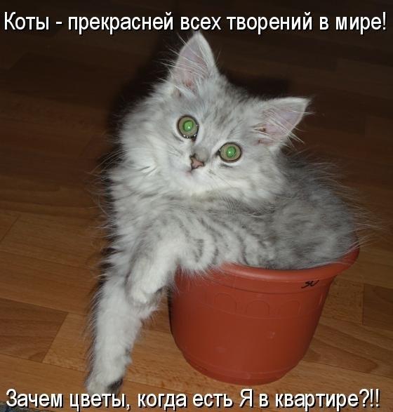 коты и цветы - Страница 2 Xh2zJtr1xxM