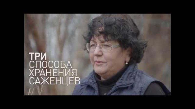 Как сохранить САЖЕНЦЫ до посадки? Видеоинструкция от Питомника Сады Урала