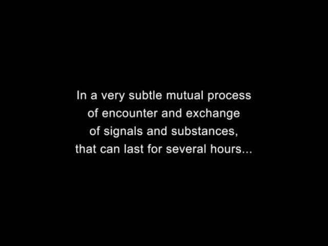 The Cellular Dance of Love - v.1