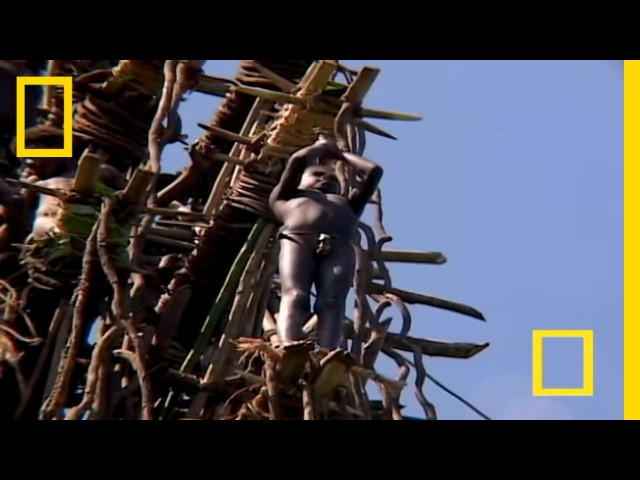 Меланезия: прыжки с лозы. Мужчины строят 100-метровую башню, чтобы подвергнуть юношей серьезному испытанию