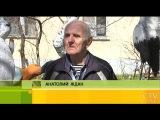 Животные, герои мульфильмов и ручеек пенсионер из Минска создал настоящий зоопарк из пенопласта