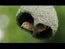Что строят животные? Архитекторы мира дикой природы. Фильм Discovery Science HD 18.01.2017