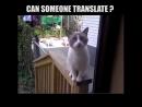 Впусти меня