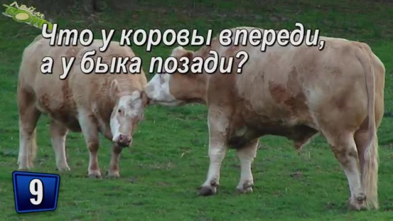 2yxa_ru_SHutochnye_zagadki_i_voprosy_c_podvohom_Logicheskie_zagadki_