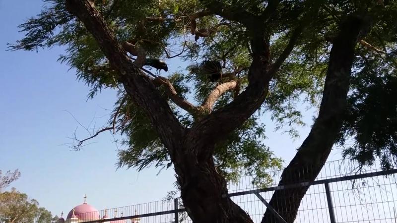 Мы же русские туристы! Эпизод 2 - Скрытая угроза и павлины на дереве.