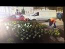 С каждым днём наш любимый район становится всё краше и зеленее! На видео: МБУСиБ Кировского района проводит высадку цветов по ул