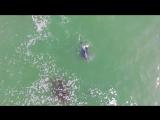 Взгляд на стаю дельфинов с высоты