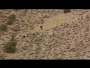 Animal Planet Армагеддон животных 1 серия Лучи смерти