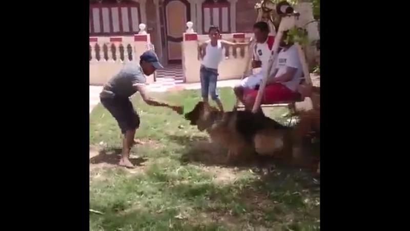 ахтунг злюкен собакен зубен яйцен клац-клац
