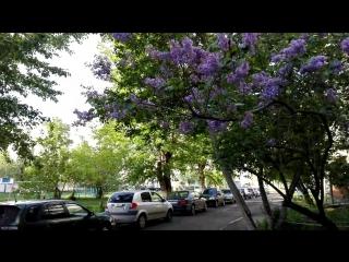 Мое весеннее утро, тишина и пение птиц 24.05.17