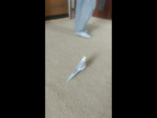 оставила мужа-собачника с попугаем