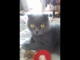 Гера моя кошка
