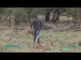 Fallout battle with kangaroo (Битва с кенгуру)