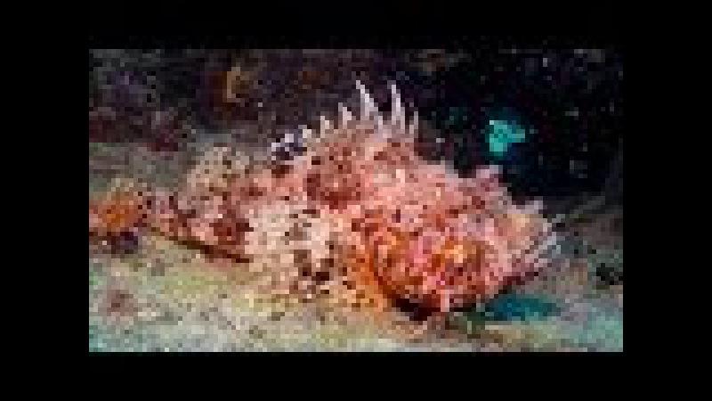 Tauchen in Kroatien Insel Cres Diving in Croatia Cres