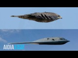 Why No Nation Wants to Battle America's B-2 Spirit Stealth Bomber