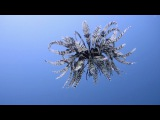 Rare Moment Feather Star Is Caught Swimming