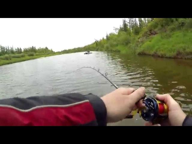 Sebile. Flatt Shadd. Jerkbait fishing for pike in Siberia. Рыбалка на джеркбейты в Сибири. Щука.