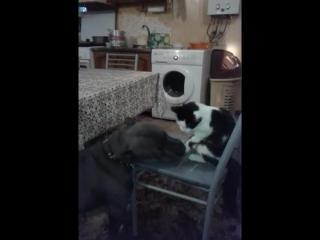 Не содись на мой стул киса