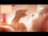Посмотрите, как развивается ребенок во время беременности от недели к неделе. Впечатляющее видео!)