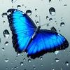 Парк Тропических Бабочек и контактный зоопарк