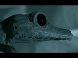 Leaf Geckos Awesome Stealth Hunting - Madagascar w David Attenborough - BBC