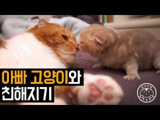 아빠 고양이와 친해지기 Daddy cat Baby cat [탐묘생활]