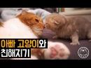 아빠 고양이와 친해지기 Daddy cat Baby cat 탐묘생활