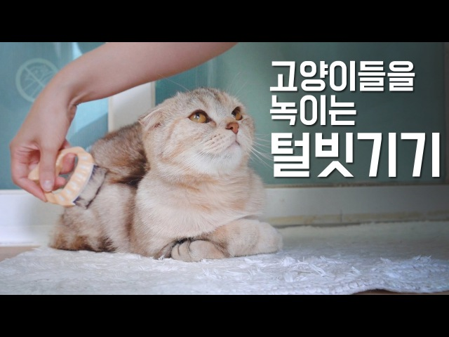 고양이들을 녹이는 털빗기기 방법How to brush your cat, so that they just melt. [SURINOEL]