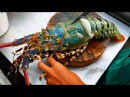 Thailand Street Food - The BIGGEST RAINBOW LOBSTER Cooked with Butter Cheese