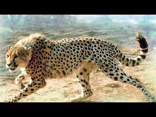Дикая Африканская Жизнь. Животный мир Африки. Документальные фильмы