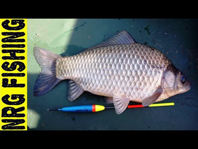 Рыбалка на ОГРОМНОГО КАРАСЯ который крутит удочку в бублик