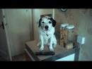 Harvey  Rabbit TV Ad HD deluxe version