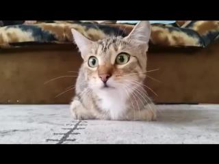 Кот смотрит фильм ужасов.