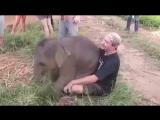 Любовь животных и людей бывает разной!