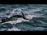 11 Epic Slow Motion Ocean Clips - Earth Unplugged