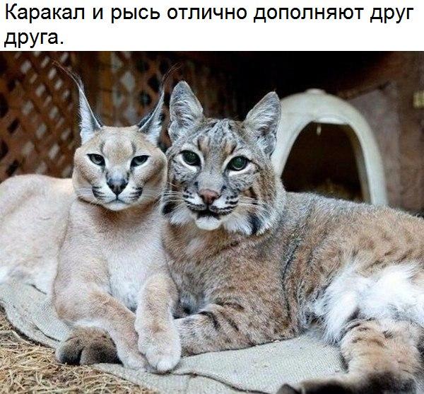 Фото №456242846 со страницы Романа Кулакова