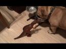Бартез vs. Динозавр